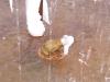 Żabka inhalacyjna