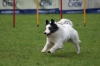 dog_chow-16