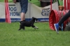 dog_chow-20