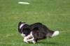 dog_chow-25