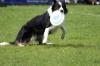 dog_chow-36
