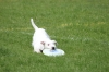 dog_chow-44
