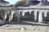 Sople na plaży